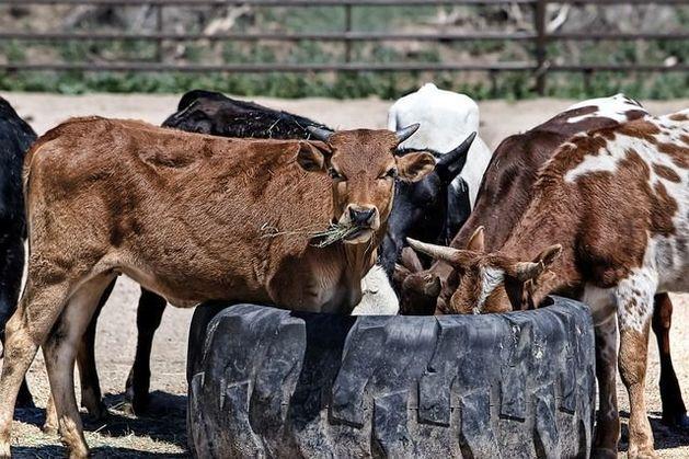 Казахская компания приобрела крупнейшее племенное хозяйство Новосибирской области
