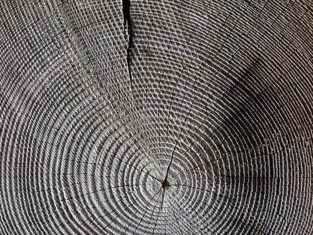Договор по Тогучинскому лесу расторгнут