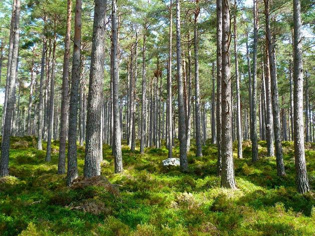 Новосибирск попал в аутсайдеры экологического рейтинга городов России