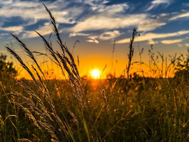 Прохладно, но солнечно: выходные без дождей придут в Новосибирск