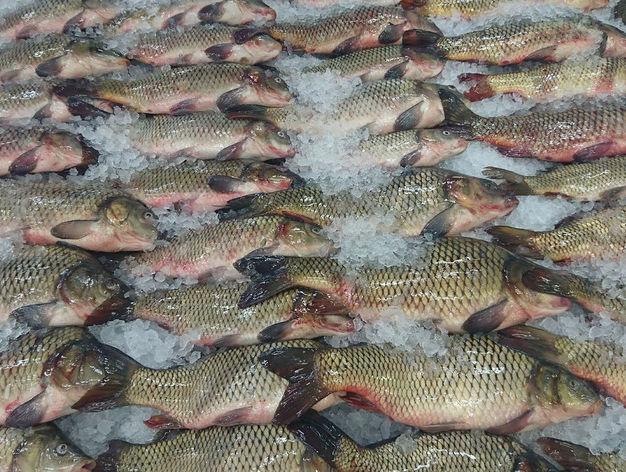 В Росрыболовстве предложили создать в Новосибирске рыбный хаб