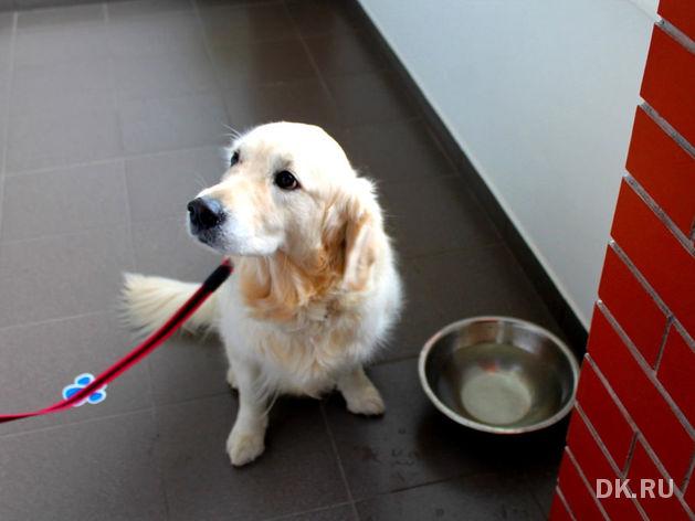 Собакам вход разрешен. Опыт создания pet-friendly офиса компании Mars в Новосибирске