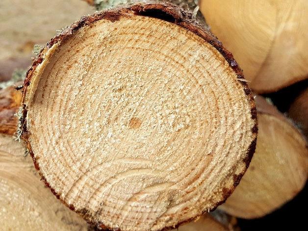 На лесных предприятиях региона внедряют безотходное производство