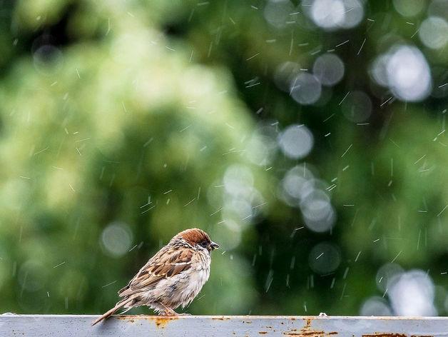 Дожди и прохлада вернутся в Новосибирск к концу недели
