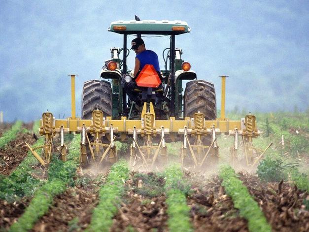 Повышенные гранты на развитие получат в этом году новосибирские фермеры