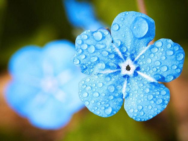 Прохладными и дождливыми будут дни летнего солнцестояния в Новосибирске