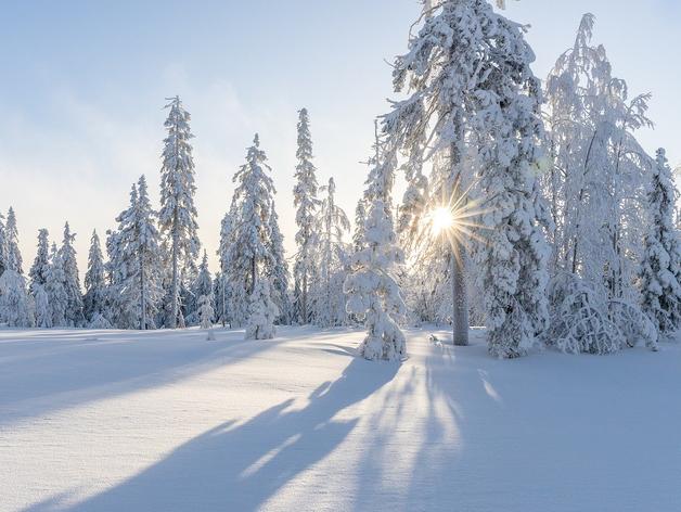 Сильные морозы и снегопады вернутся в Новосибирск в январе