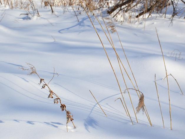 Резко потеплеет в Новосибирске в первые дни весны