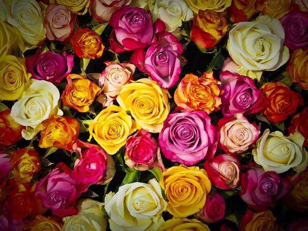 «Восстановление цветочного рынка до докризисного уровня произойдет уже в этом году»