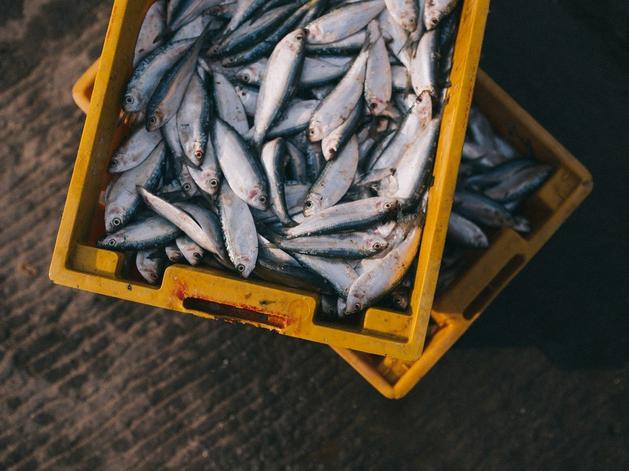 Новосибирская область увеличила экспорт рыбы в страны Европы