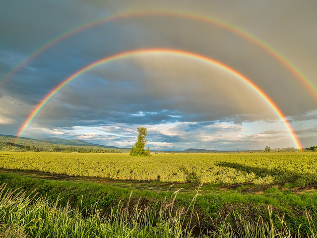 Дожди и небольшое потепление ждет новосибирцев на выходных