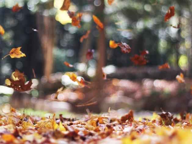 Тучи и дождь: синоптики рассказали, какая погода ждет новосибирцев